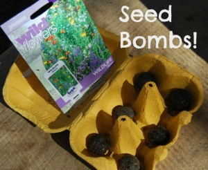 Make Your Own Seed Bomb!