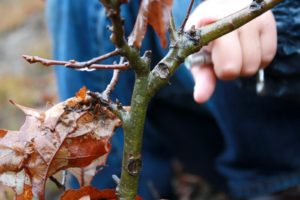 Identifying Trees in Winter (Wrexham)