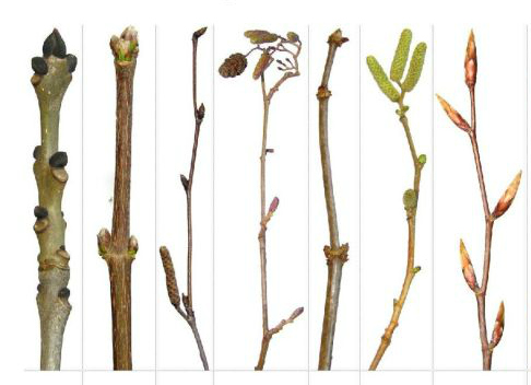 a picture of seven different twigs