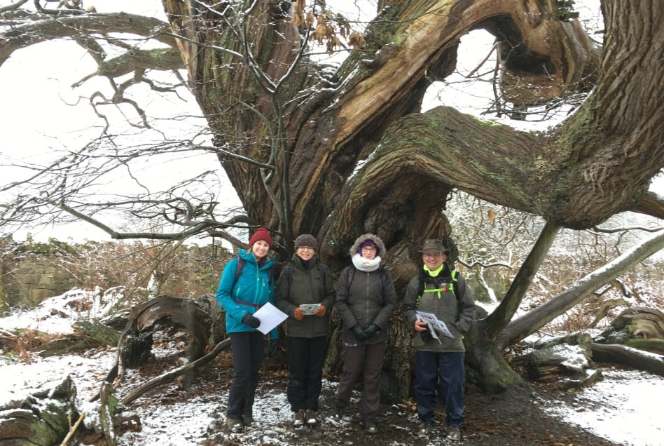 identifying winter trees in north wales