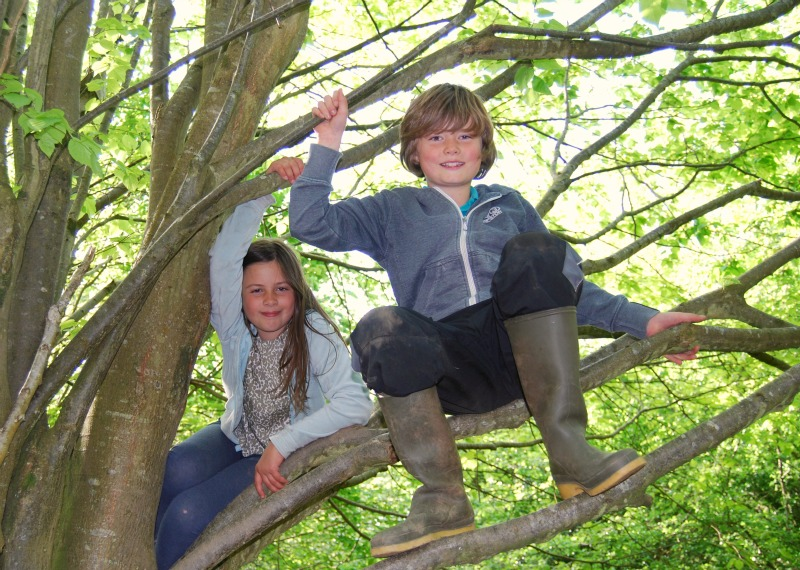 tree climbing at forest school