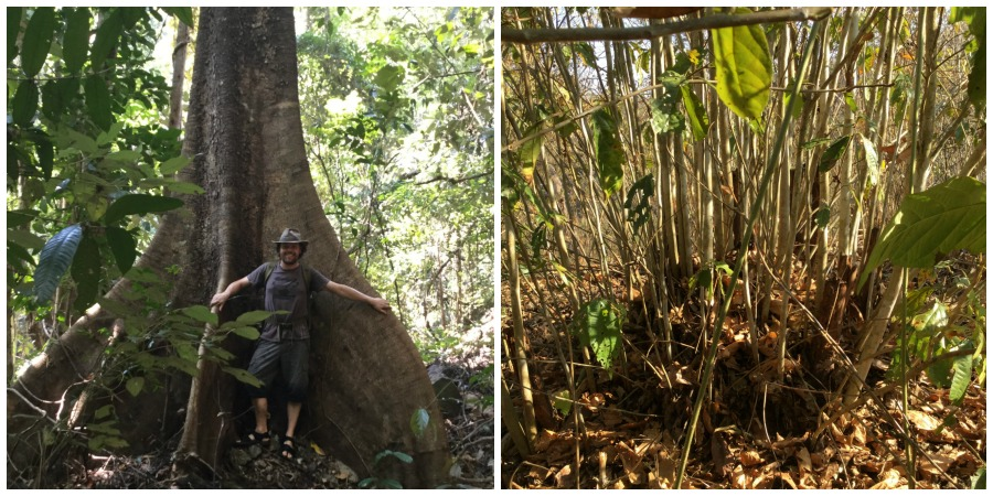 bushcraft jungle trek in thailand
