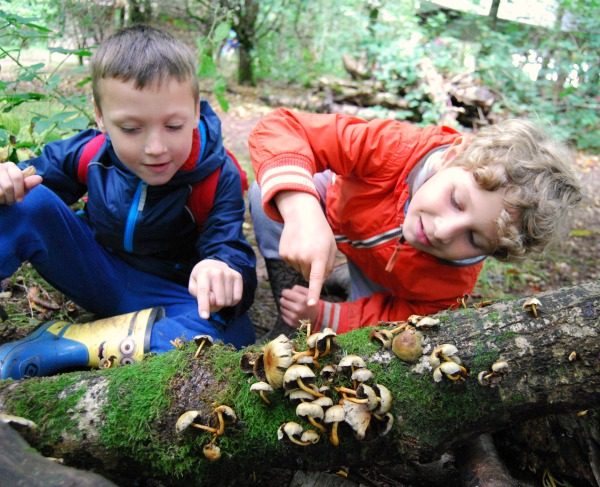 kids nature scavenger hunt mushrooms