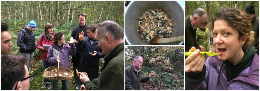 wild food foraging course in north wales