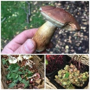 wild food foraging in north wales