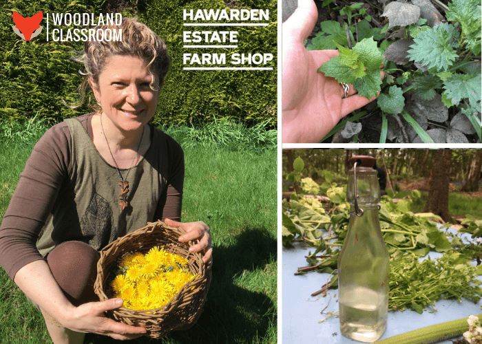 weeds for wellbeing at hawarden estate with woodland classroom