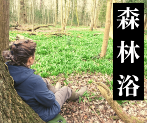 shinrin yoku & forest bathing in wales