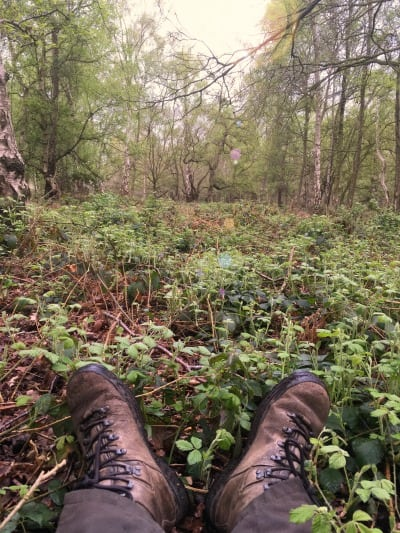 sit spot in the woodland