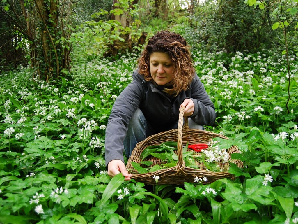 foraging & wild food in north wales