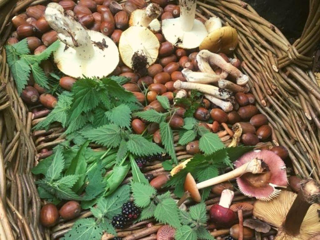 autumn foraging walk in north wales