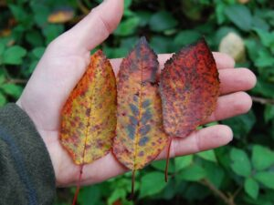how to identify trees in autumn