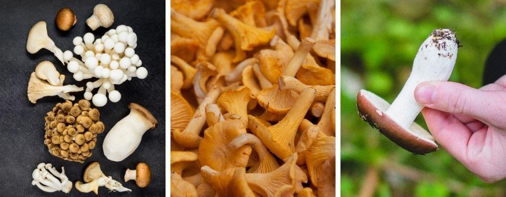 edible fungi workshop - foraging & wild food