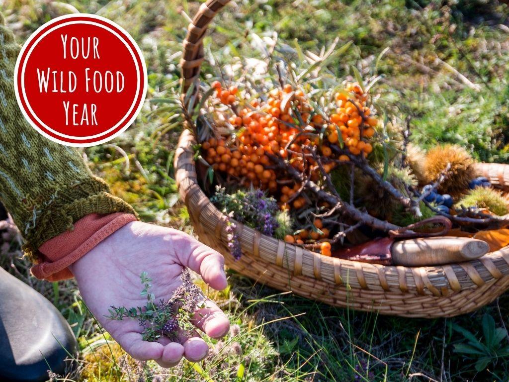 wild food & foraging online workshop autumn