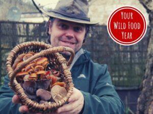 best of winter foraging & wild food workshop
