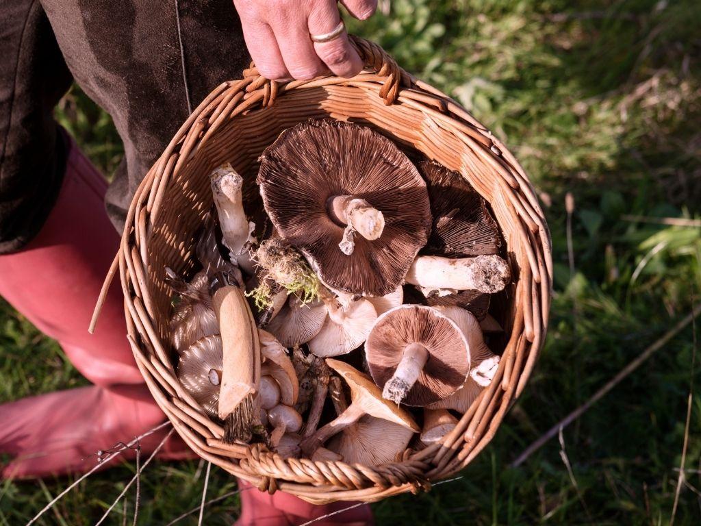 discover edible mushrooms & fungi. Online workshop