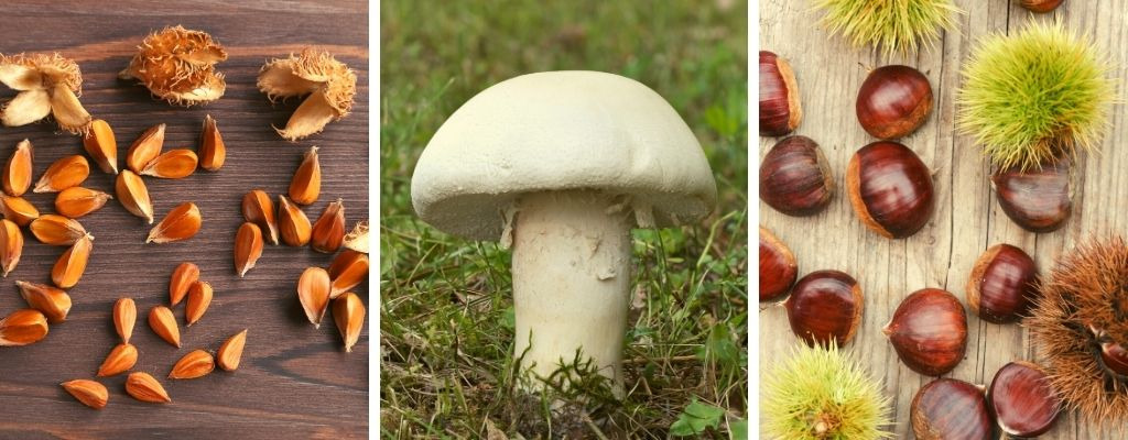 wild food and foraging in october