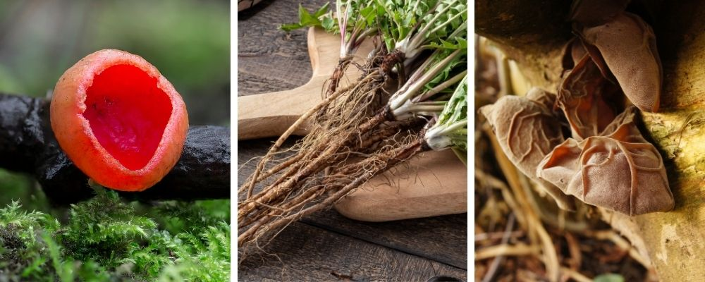 wild food and foraging in january
