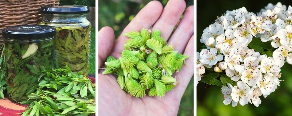 may wild food & foraging course