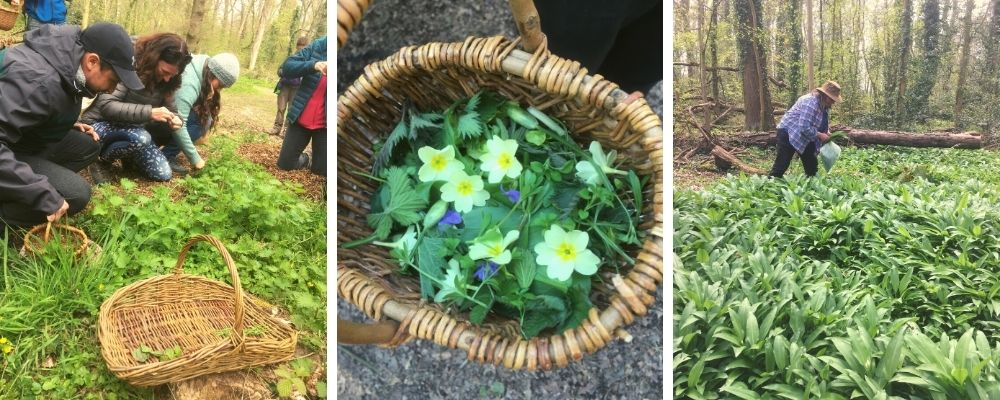 spring foraging and wild food walk