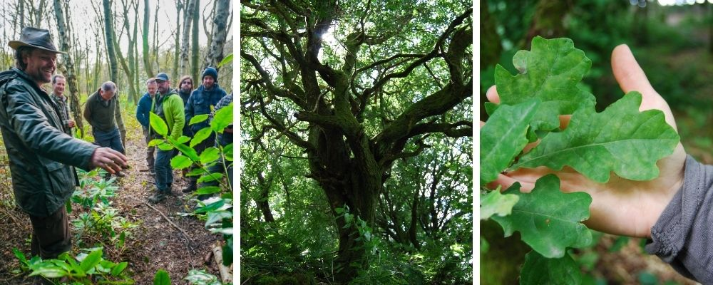 tree identification course in north wales