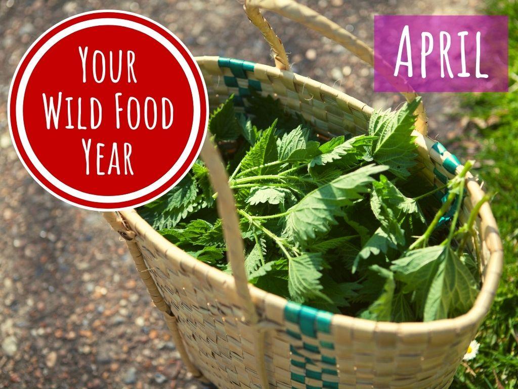 wild food and foraging workshop online april