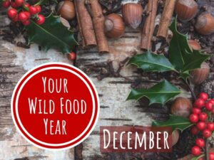 wild food and foraging class in december christmas