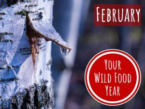 wild food & foraging in february