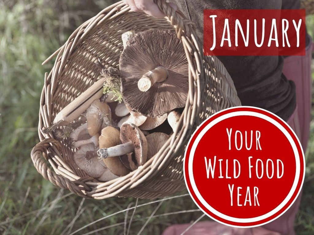 wild food and foraging workshop in winter