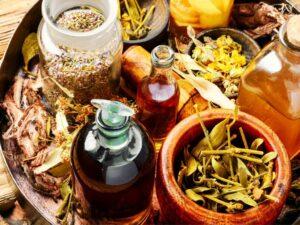 wild food online workshop - herbalism