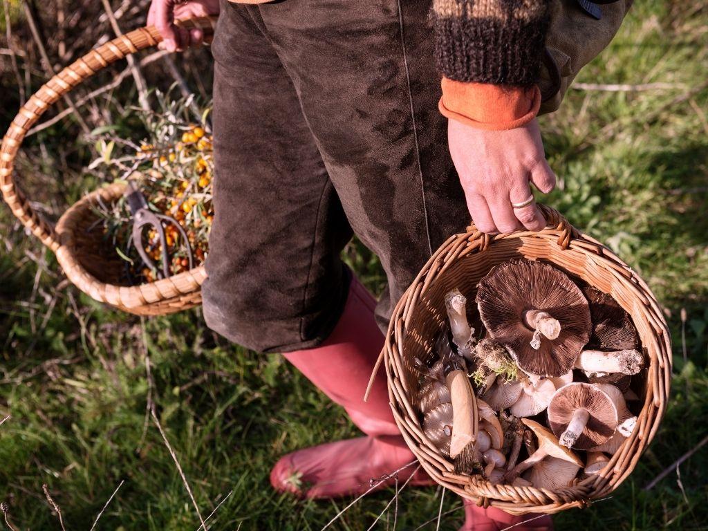 wild food workshop online
