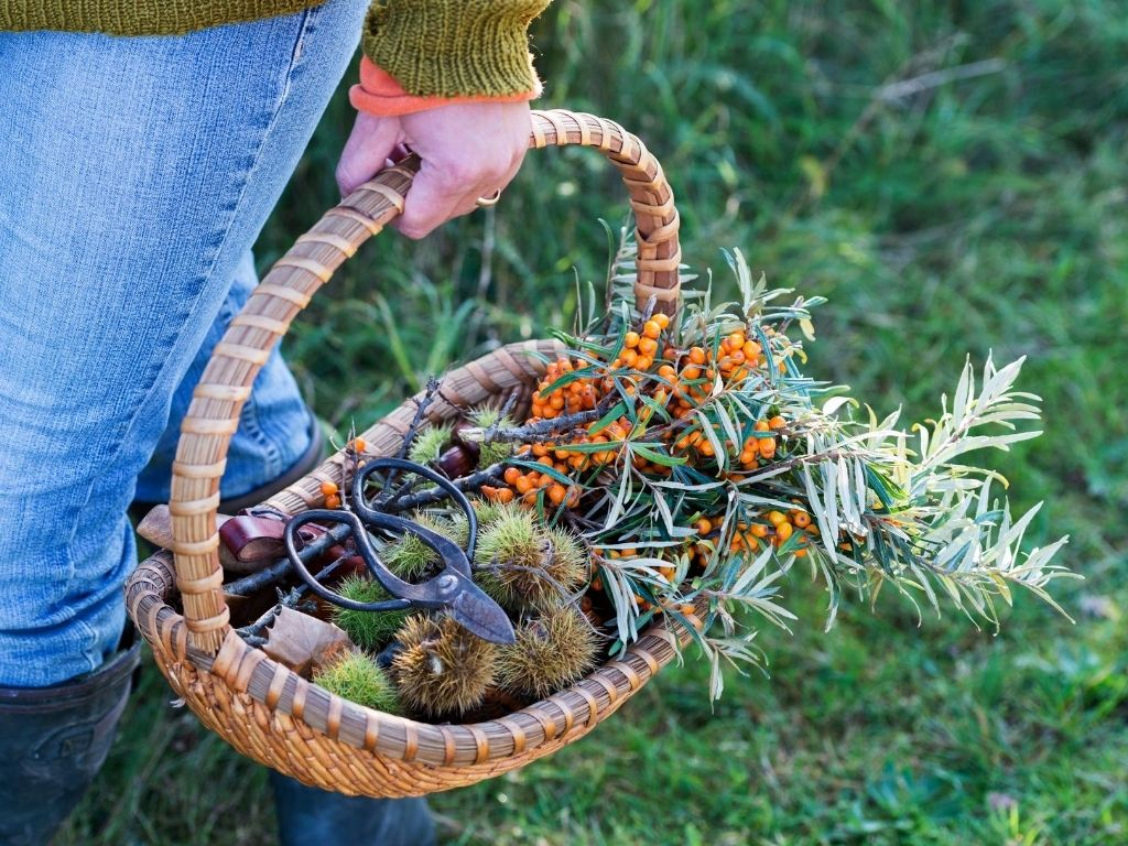 wild food & foraging workshop in north wales