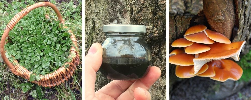 winter foraging and wild food walk