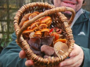 winter foraging and wild food walk in north wales
