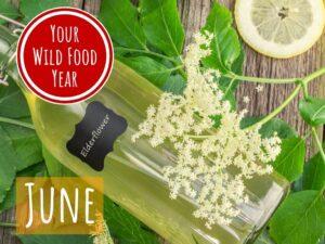online foraging and wild food workshop - june - summer