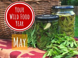 wild food & foraging workshop spring online