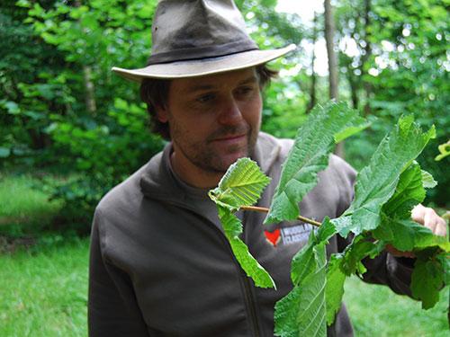tree identification courses