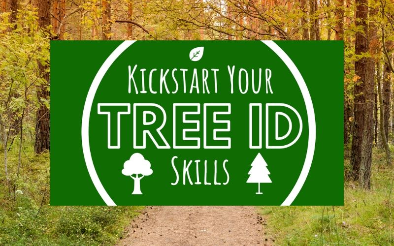 kickstart your tree id skills - online course