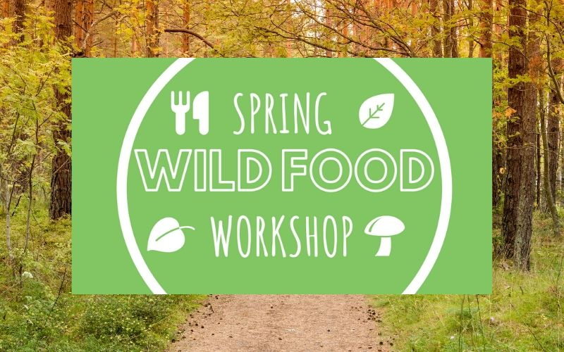wild food workshop april - may