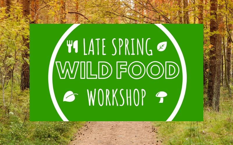 wild food workshop may - june