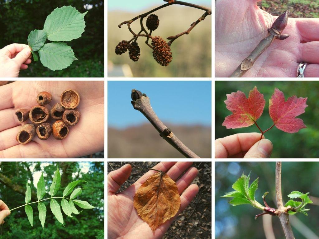 top 3 easy ways to identify trees