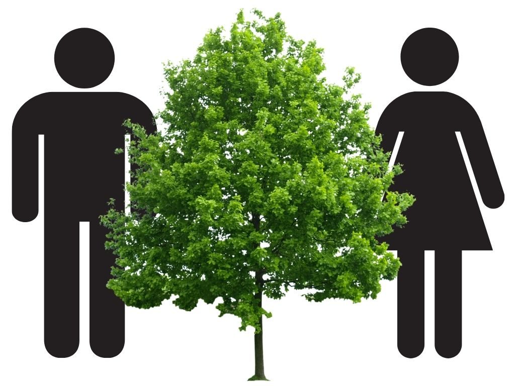 are trees male and female?