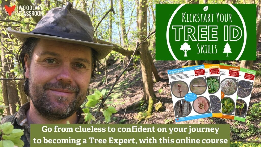 kickstart your tree id skills, free online course