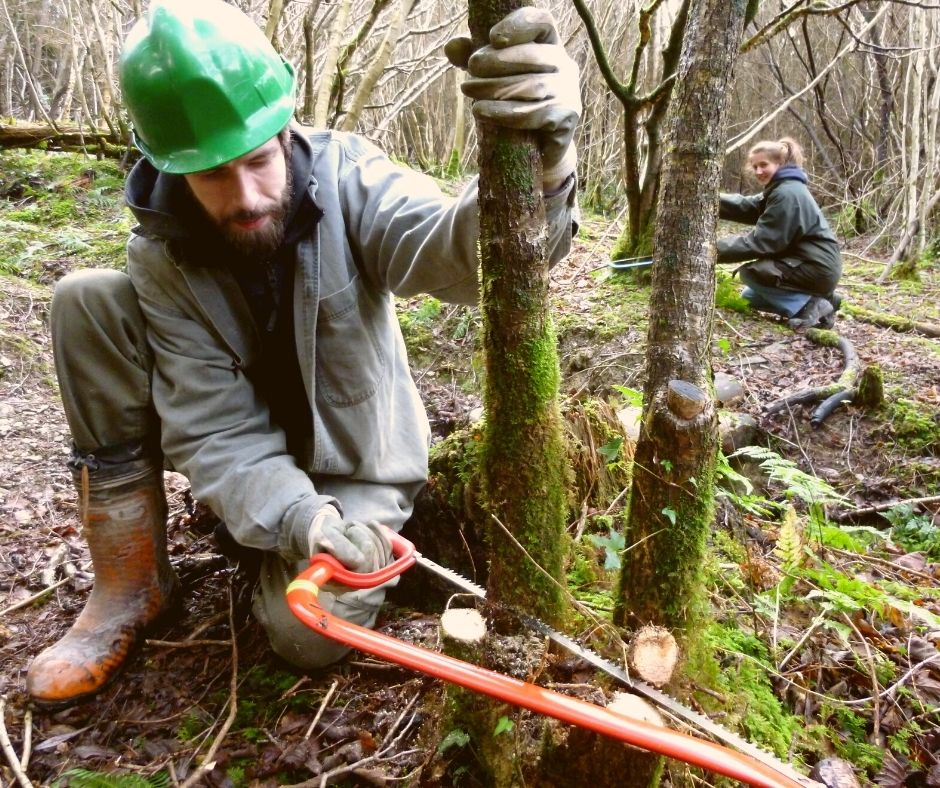 sustainable woodland management course in north wales