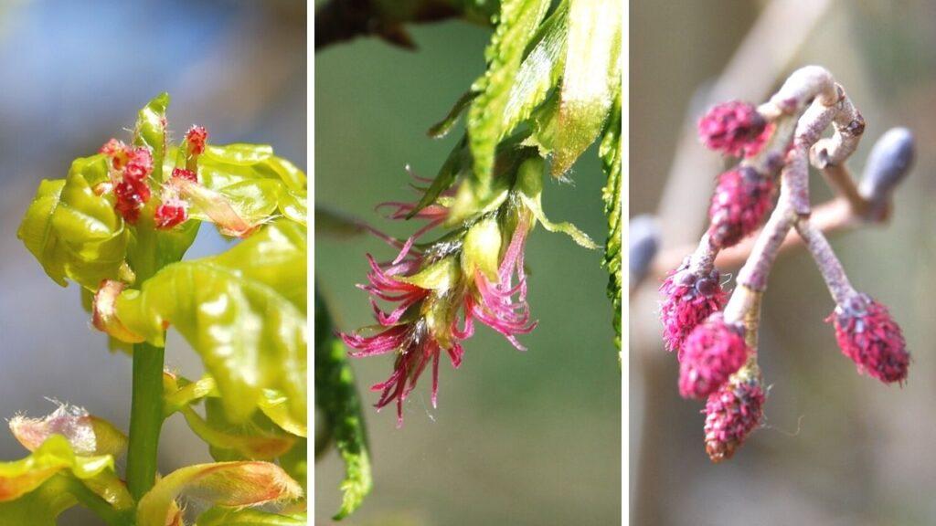 3 amazing but tiny tree flowers
