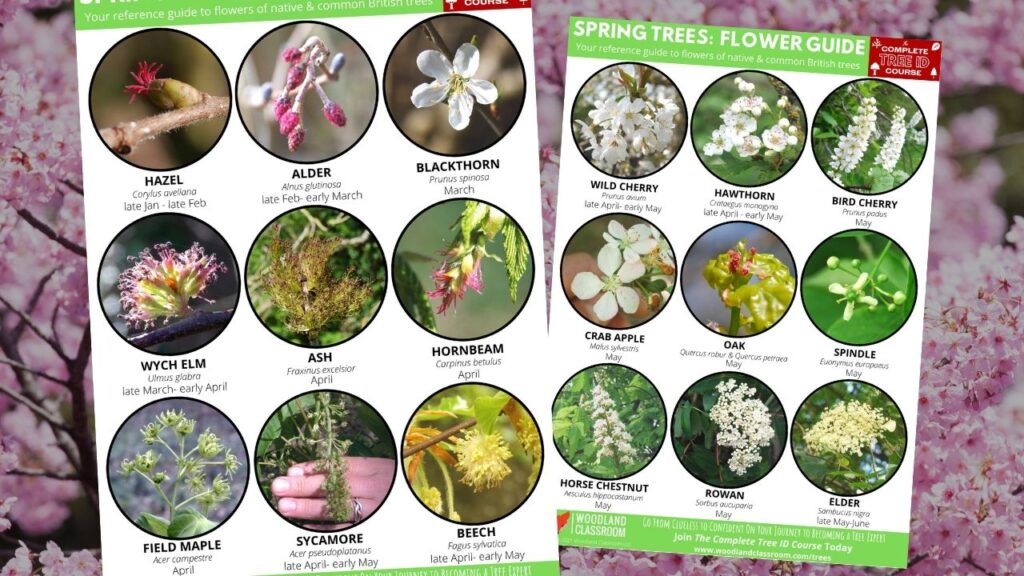 spring tree flower guide - free download