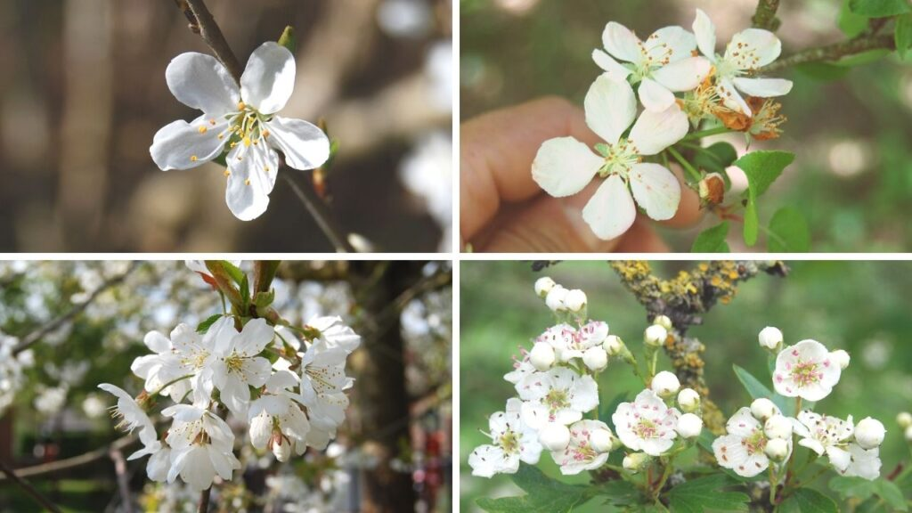 how to identify spring tree flowers
