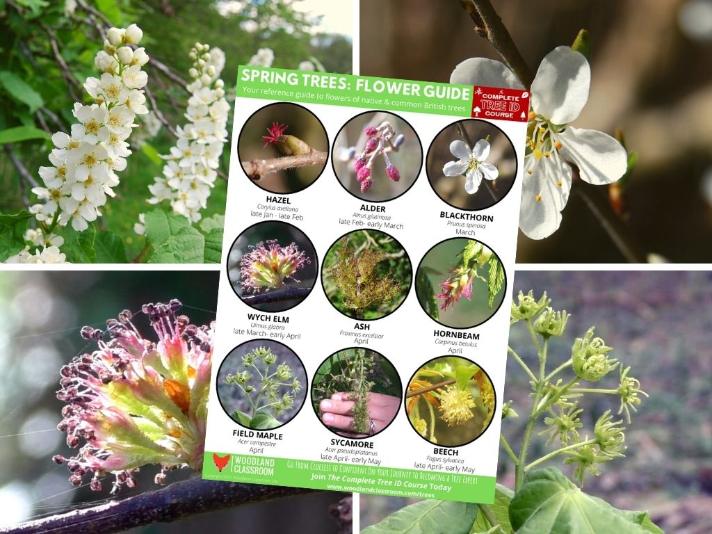 spring tree flowers guide