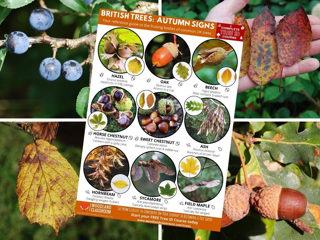 free autumn tree guide
