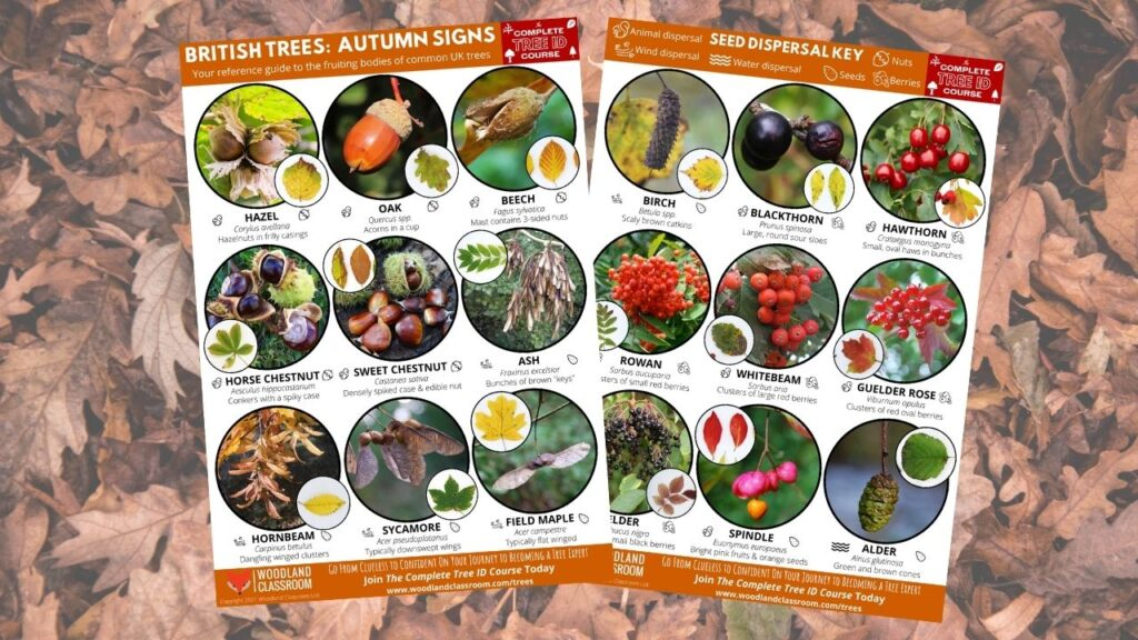 autumn tree guide - free download