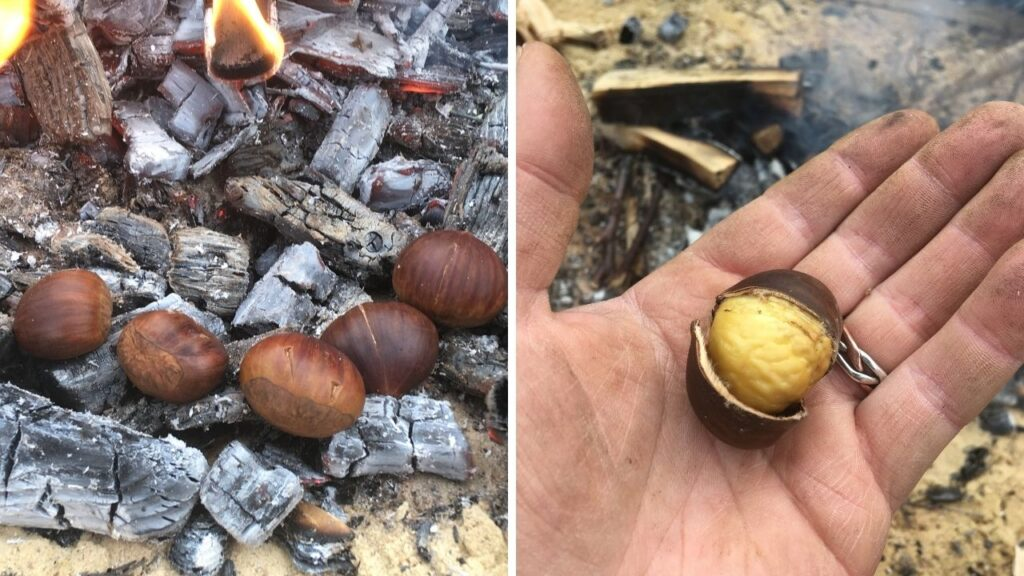 campfire cooking sweet chestnuts